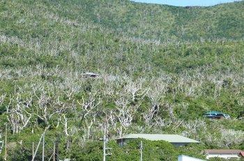 23緑の再生を待つ島風景.JPG
